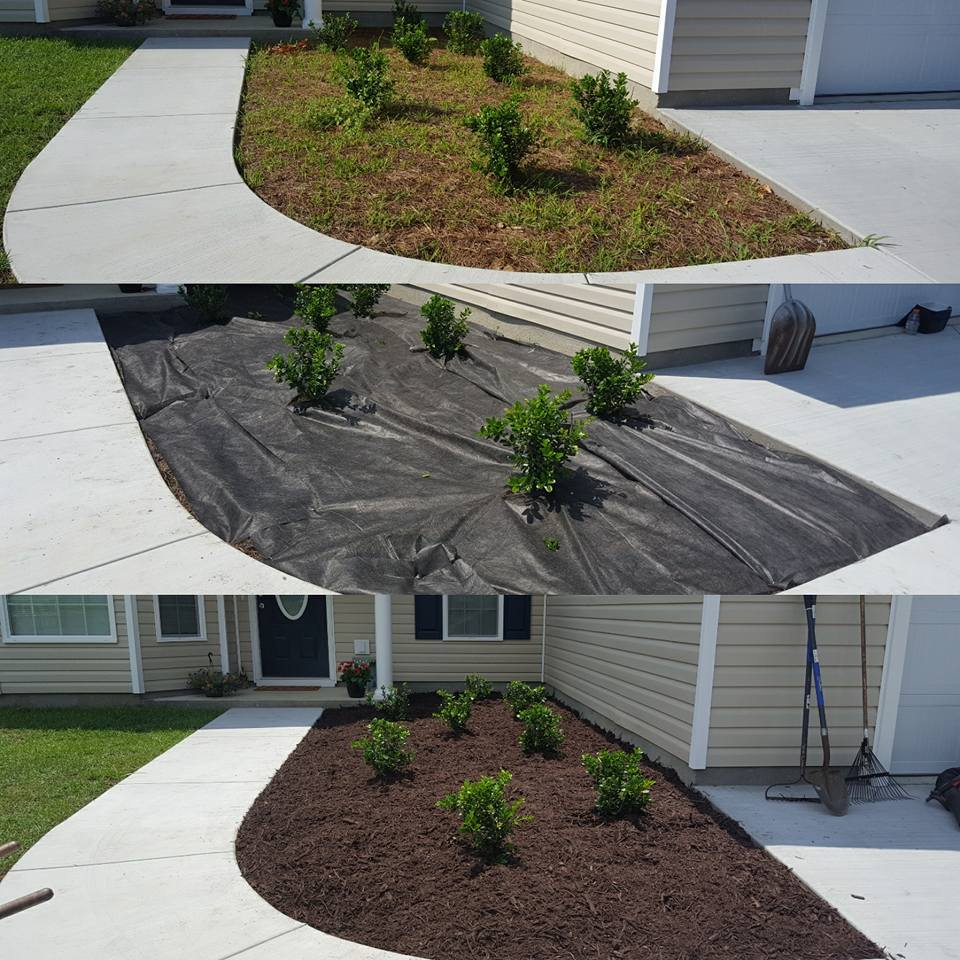 Pine Straw removal and mulch installation in Aynor, SC 29511