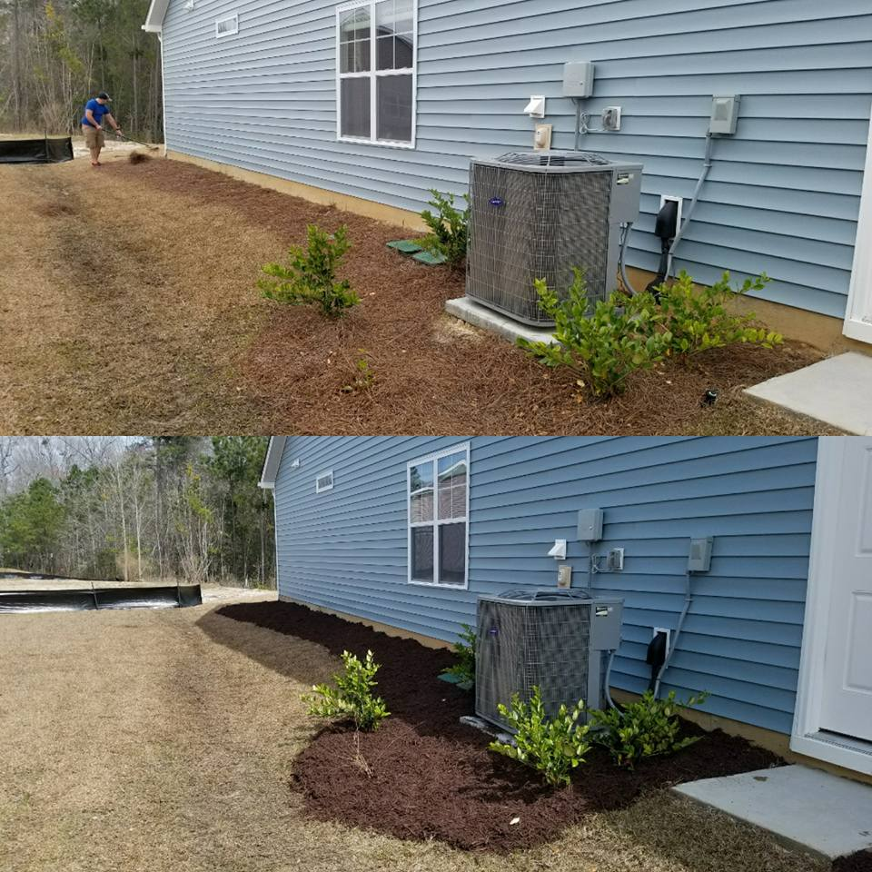 Pine Straw removal and mulch installation in Little River, SC 29566