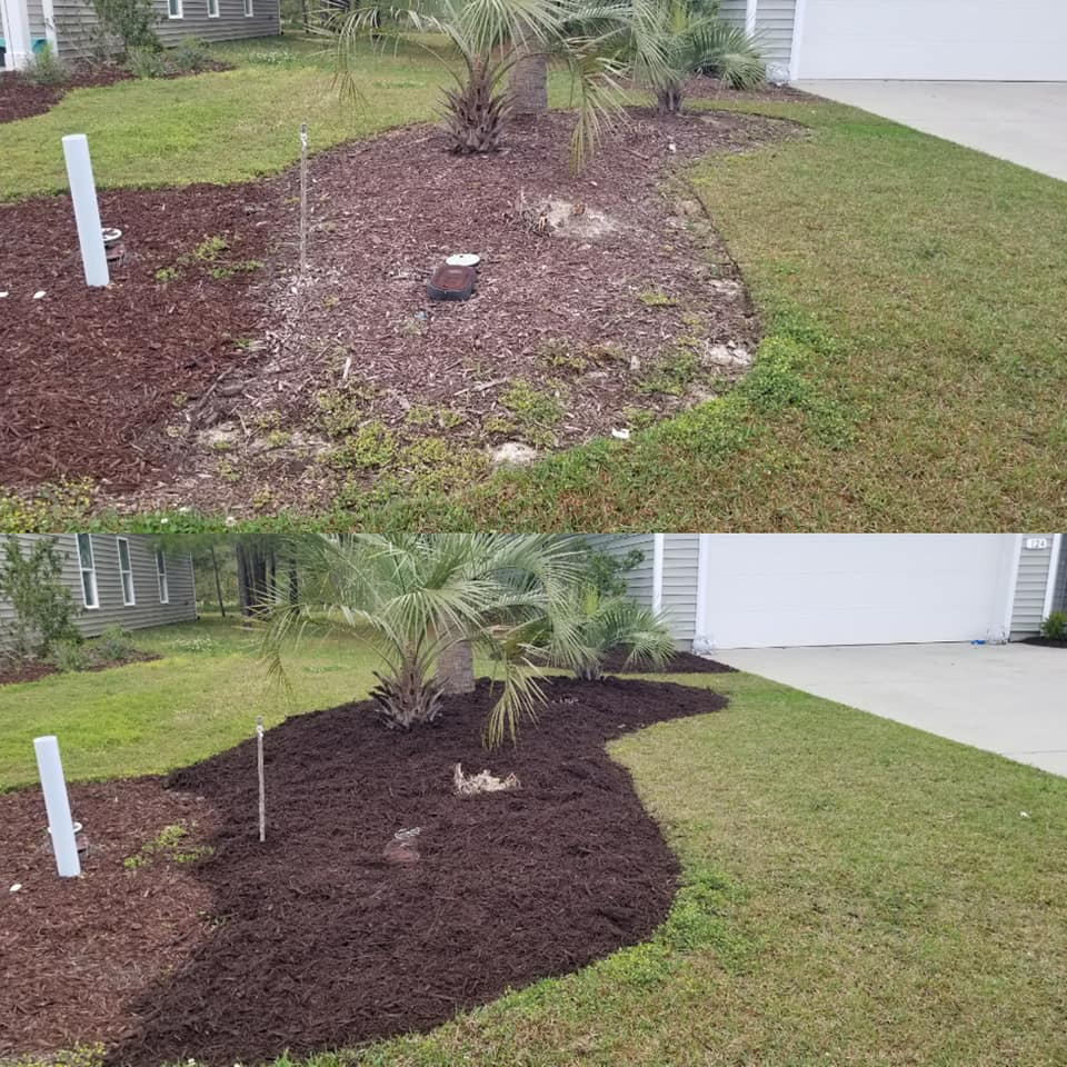 mulch installation to refresh old mulch in Longs, SC 29568