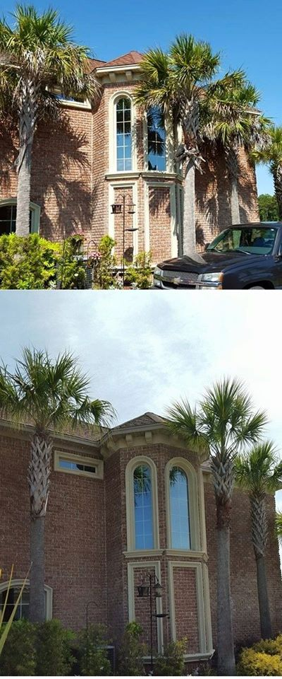 Trimmed palm trees in Plantation Lakes neighborhood Myrtle Beach,SC 29579