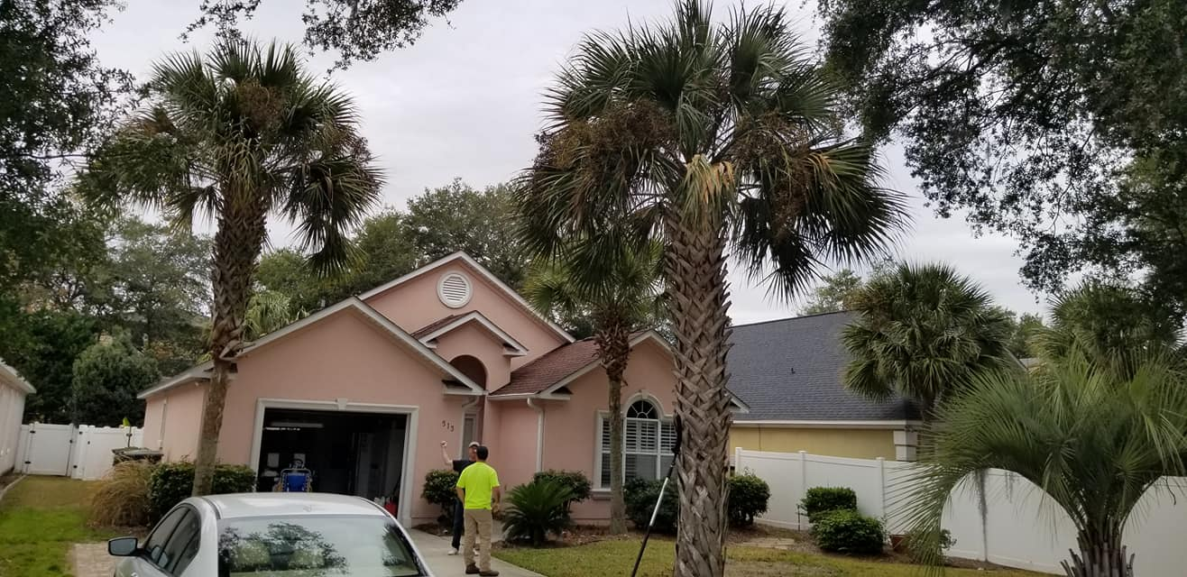 Trimmed palm trees in North Myrtle Beach,SC 29582