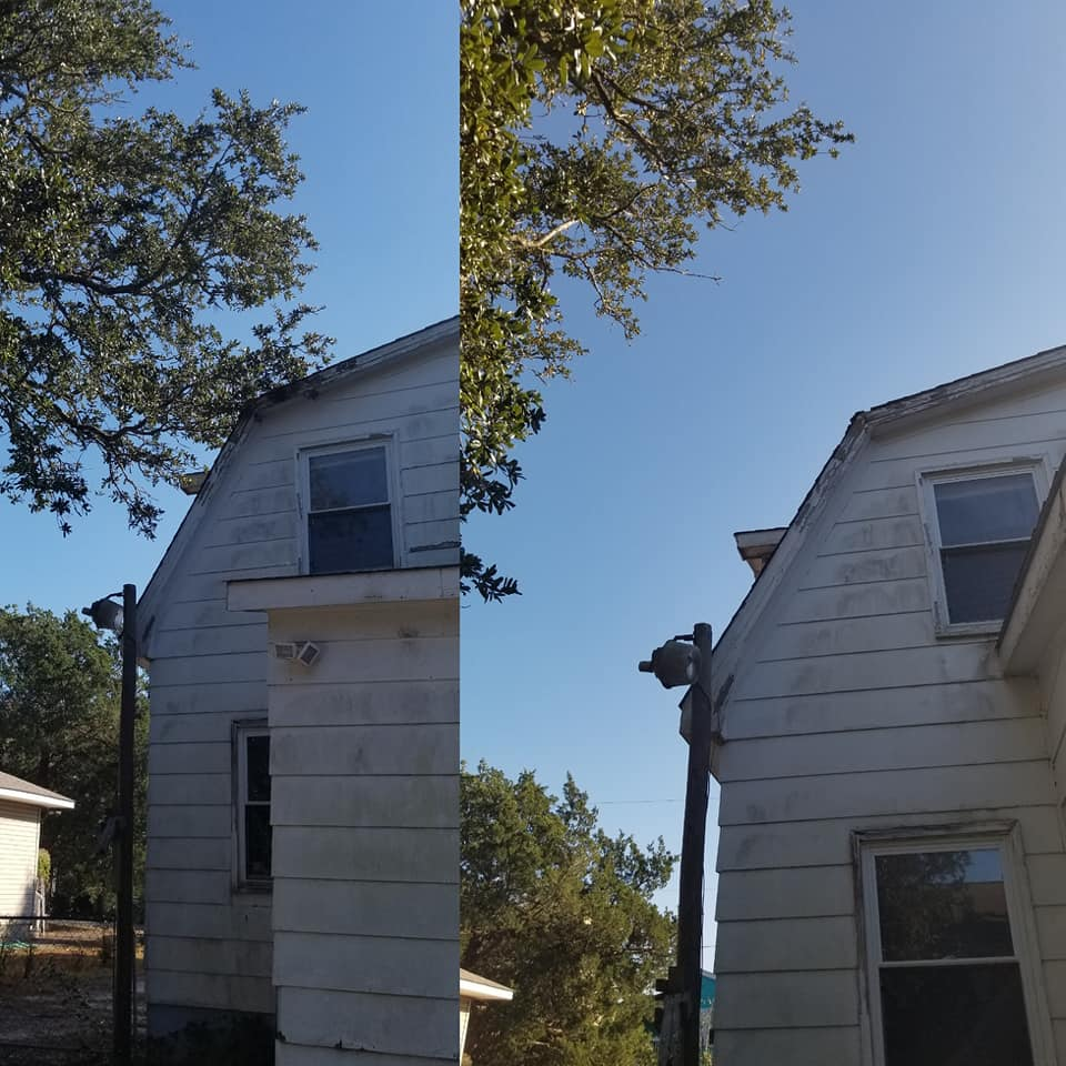 Trimmed limbs off house and 1 large palm tree North Myrtle Beach,SC 29582