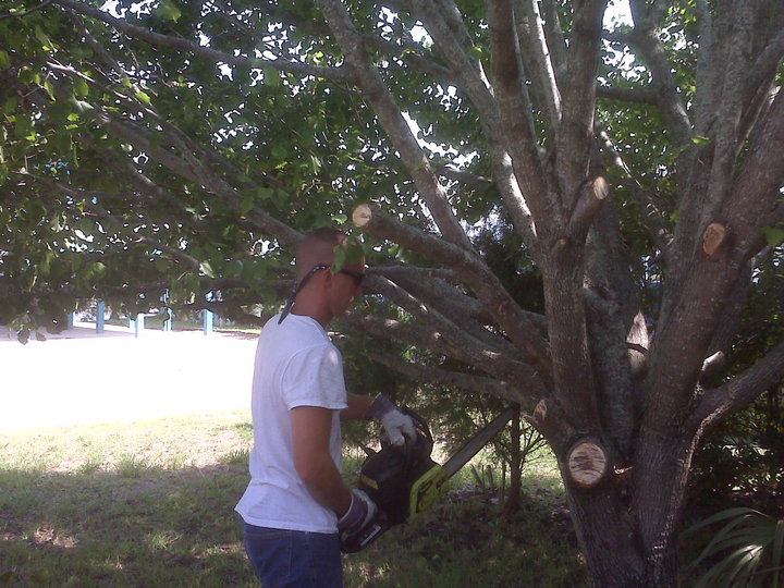 Tree trimming in Cherry Grove,SC 29582