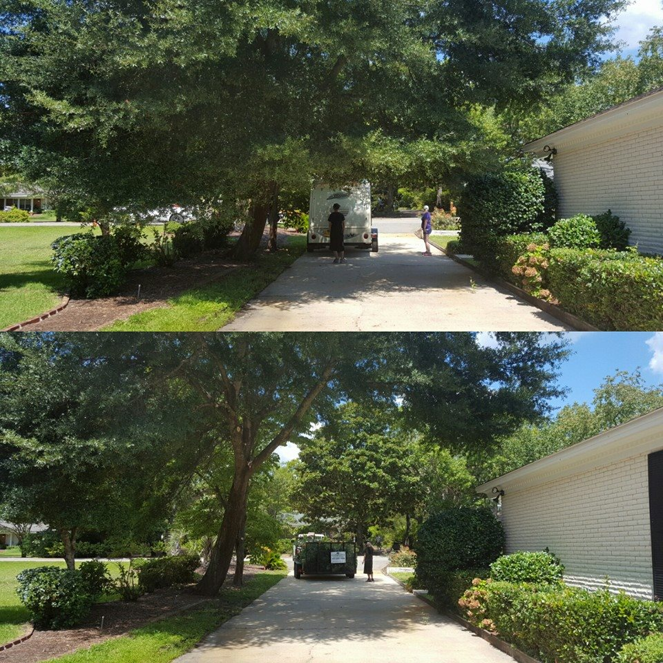 Tree trimming in Myrtle Beach