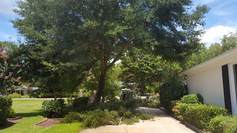 Trim trees over driveway in Myrtle Beach