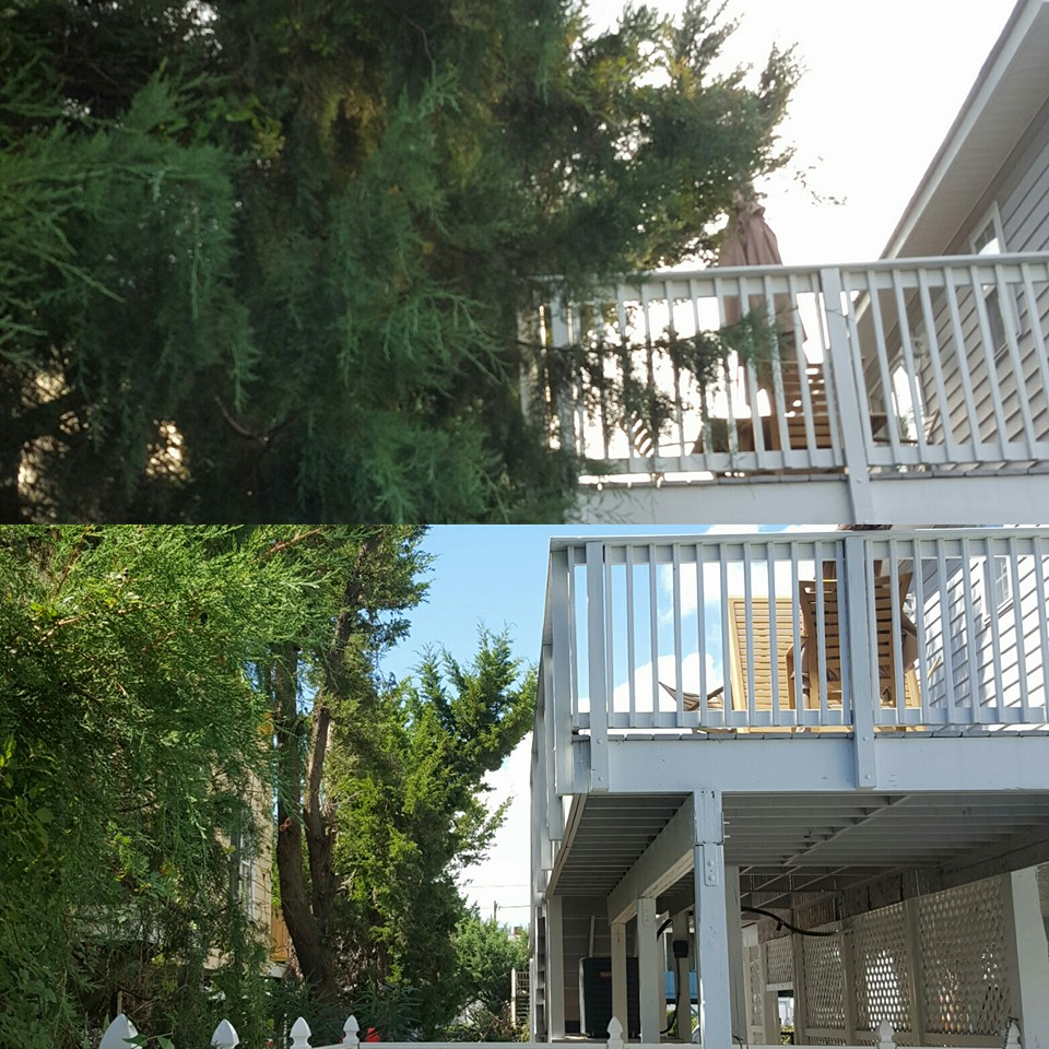 trimmed trees and shrubs and removed some in Cherry Grove,SC 29582